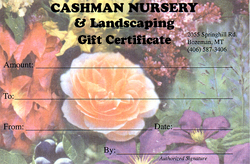 Cashman Nursery has Gift Certificates!